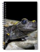 Fire Salamander Salamandra Salamandra Spiral Notebook