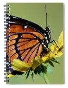 Florida Viceroy Spiral Notebook