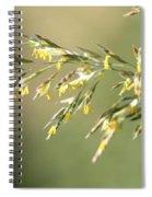 Flowering Brome Grass Spiral Notebook