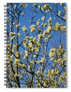 Fluffy Catkins At At Tree Against Blue Sky Spiral Notebook