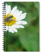 Fly On Daisy 3 Spiral Notebook