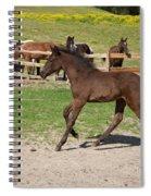 Foal Spiral Notebook