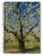 Fruit Orchard Spiral Notebook