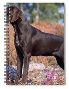 German Short-haired Pointer Puppy Spiral Notebook