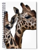 Giraffes Spiral Notebook