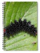 Glanville Fritillary Butterfly Caterpillar - Melitaea Cinxia Spiral Notebook