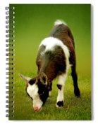 Goat Spiral Notebook