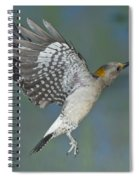 Golden-fronted Woodpecker Spiral Notebook