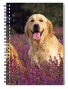 Golden Retriever Dogs In Heather Spiral Notebook