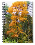 Golden Tree Spiral Notebook