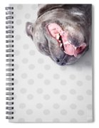 Goofy Blue Staffie Lying On His Back Spiral Notebook