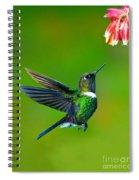 Gorgeted Sunangel Spiral Notebook