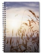Grass At Sunset Spiral Notebook