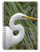 Great Egret Close Up Spiral Notebook