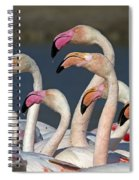 Greater Flamingos, France Spiral Notebook