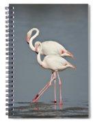 Greater Flamingos Phoenicopterus Roseus Spiral Notebook