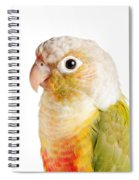 Green-cheeked Conure Pineapple P Spiral Notebook