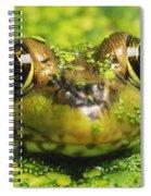 Green Frog Hiding In Duckweed Spiral Notebook