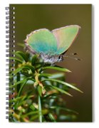 Green Hairstreak Spiral Notebook