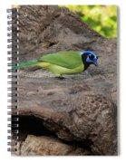 Green Jay Spiral Notebook