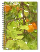 Green Leaves And Mature Oranges On The Tree Spiral Notebook