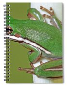Green Treefrog Spiral Notebook