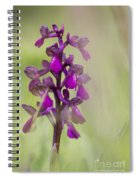 Green-winged Orchid Spiral Notebook