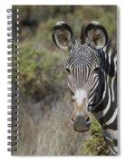 Grevys Zebra Stallion Spiral Notebook