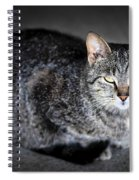 Grey Cat Portrait Spiral Notebook