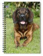 Hanover Hound Spiral Notebook