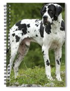 Harlequin Great Dane Spiral Notebook