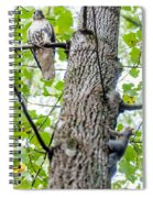 Hawk Hunting For A Squirrel On An Oak Tree Spiral Notebook