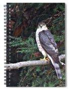 Hawk On Branch Spiral Notebook