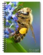 Honeybee On California Lilac Spiral Notebook