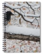 Hooded Crow First Snow Spiral Notebook