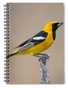 Hooded Oriole Spiral Notebook