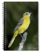 Hooded Oriole Female Spiral Notebook