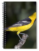 Hooded Oriole Male Spiral Notebook