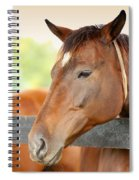 Horse On A Farm  Spiral Notebook
