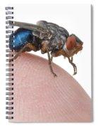 Human Botfly Belize Spiral Notebook