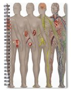 Human Systems In The Female Anatomy Spiral Notebook