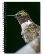 Humming Bird Spiral Notebook