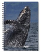 Humpback Whale Breaching Prince William Spiral Notebook