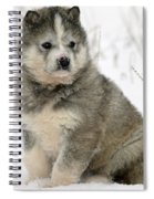 Husky Dog Puppy Spiral Notebook