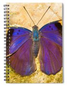 Indian Leaf Butterfly Spiral Notebook