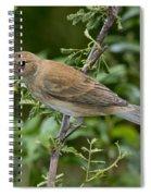Indigo Bunting Hen Spiral Notebook