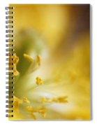Inside The Poppy Spiral Notebook