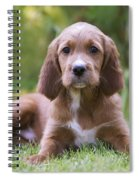 Irish Setter Puppy Spiral Notebook
