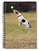 Jack Russell Jumping For Ball Spiral Notebook