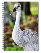 Juvenile Sandhill Crane Grus Canadensis Pratensis II Usa Spiral Notebook